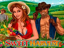 Богатый Урожай – автомат для легких выигрышей онлайн