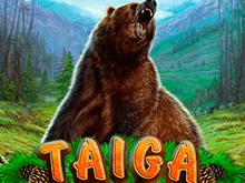 Игровой аппарат Taiga