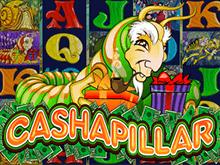 Популярный игровой автомат Cashapillar из топ рейтинга